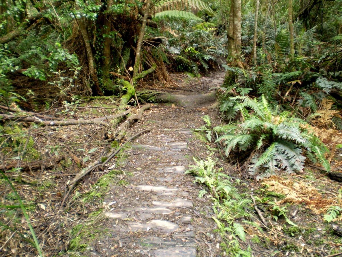 Path to South Cape Rivulet Tasmania